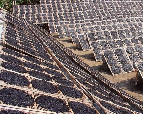 平潭头水紫菜已上市 产量较往年每亩增收约30%
