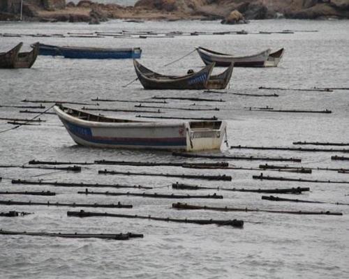 """深海产品需求增 海洋资源透支大 中国远洋渔业打""""组合拳""""突围"""